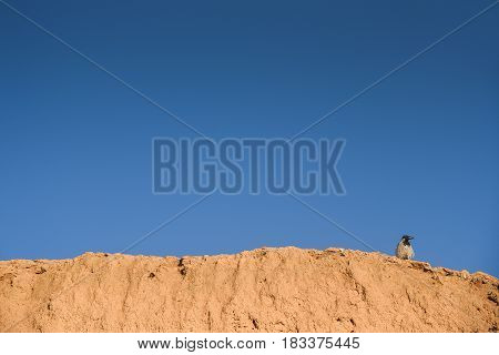 lonely bird perch on rough clay wall against the clear blue sky natural environment background