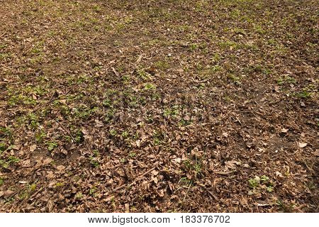 Natural uncultivated grass plot covered with dull brown fallen leaves in autumn