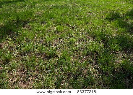 Forest glade covered with grass in spring