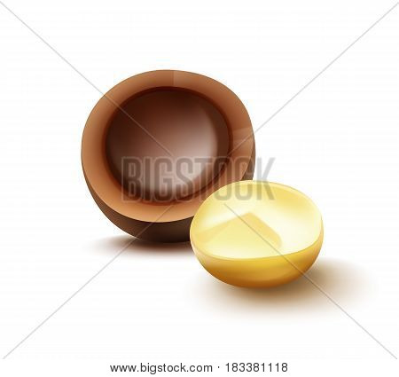 Vector realistic brocken macadamia nut with shell close up side view isolated on white background