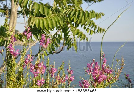 Pink flowers and a green bush on the background of the ionic sea