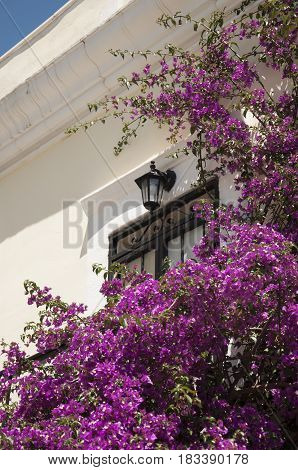 Lantern above the door surrounded by Violet Bougainvillea in front of the house in Montenegro
