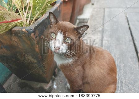Homeless Cute Cat Sit On The Street