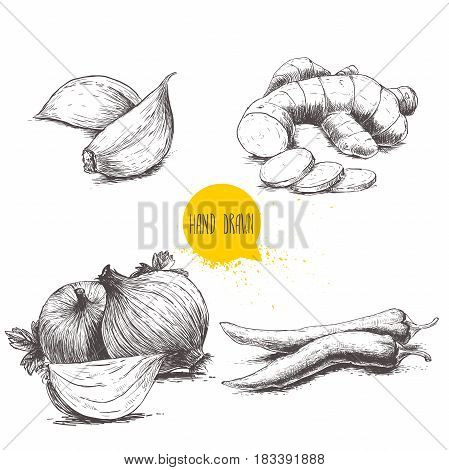 Hand drawn sketch style set illustration of different spices isolated on white background. Cloves of garlic ginger root onions and chili peppers.