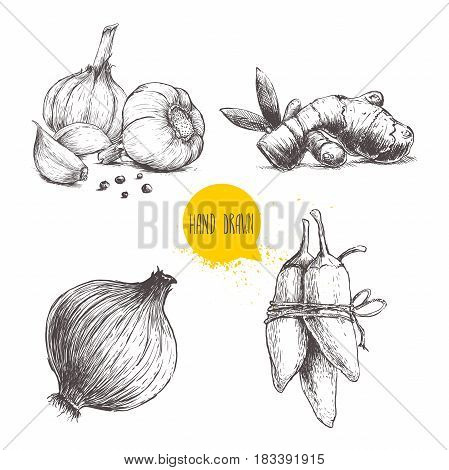 Hand drawn sketch style set illustration of different spices isolated on white background. Garlics with cloves and black peppers ginger root onion and jalapeno peppers.
