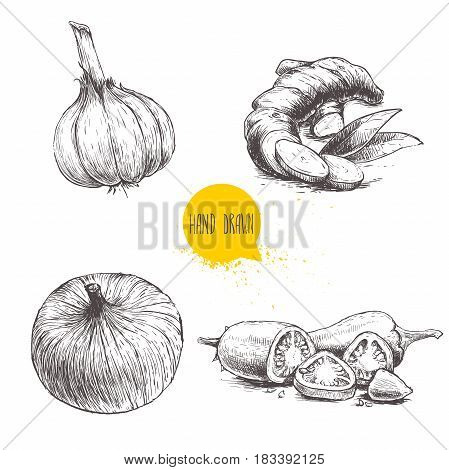 Hand drawn sketch style set illustration of different spices isolated on white background. Garlic ginger root onion and sliced red hot chili peppers.