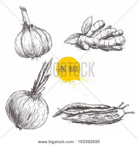 Hand drawn sketch style set illustration of different spices isolated on white background. Garlic ginger root onion and red hot chili peppers.
