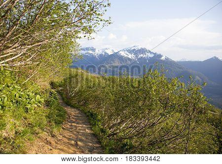 Mount Robert trail in a sunset light (Juneau Alaska).