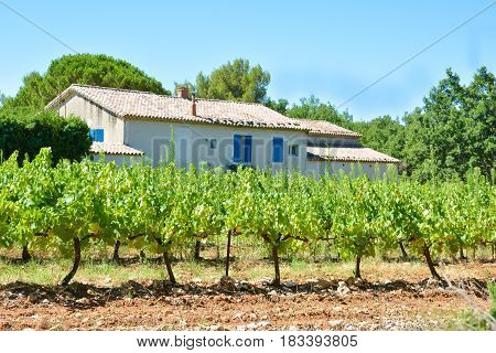 Vineyards and a typical provencal house in Provence France
