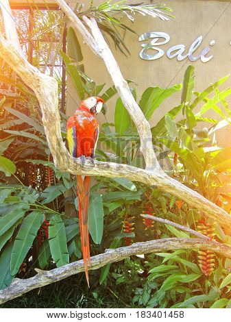 Parrot in the park by the trough on the tropical island of Bali.