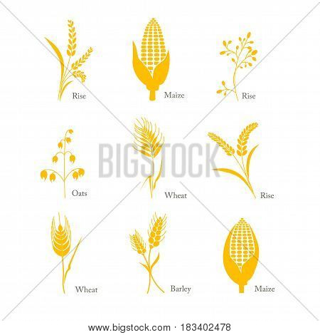 cereals, icon, crop, barley, oats, wheat rice maize complex field isolated grass seed symbol white cereals