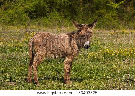 Portrait of cute baby donkey in the umbria country