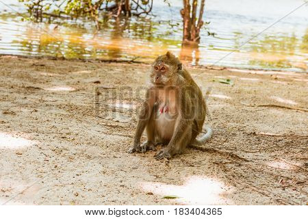 One macaque monkey on riverside in Thailand