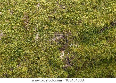 Details Of Wild Wood Green Moss - Texture