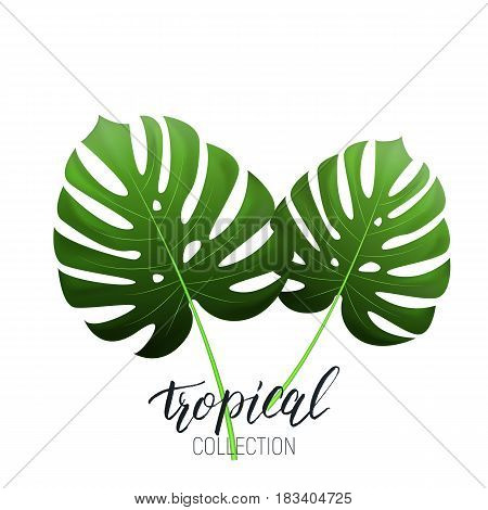 Tropical monstera leaves and calligraphy. Summer banner design layout