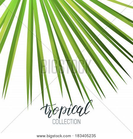 Tropical fan palm leaf and calligraphy. Summer banner design layout