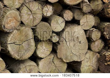 Detail Of A Lot Of Round Logs - Wooden Abstract Background. Outdoor Rack With Hut Construction Logs.