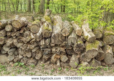 Pile Of Round Logs - Wooden Abstract Background. Outdoor Rack With Firewood Logs And Trees.