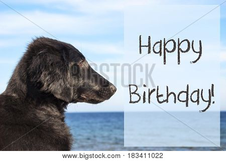 English Text Happy Birthday. Flat Coated Retriever Dog Infront Of Ocean. Water In The Background