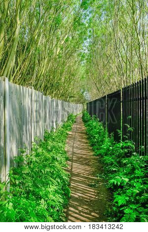Long narrow passage with fence and railings and tall trees on each side. A Springtime shot in Abridge Essex.