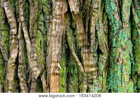 Tree trunk with various shades of green mosses and lichens