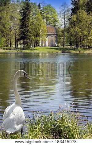 The ancient destroyed arbor in park and the swan in a grass ashore and looks at the lake