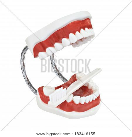 White tooth and toothbrush on white background dental care concept