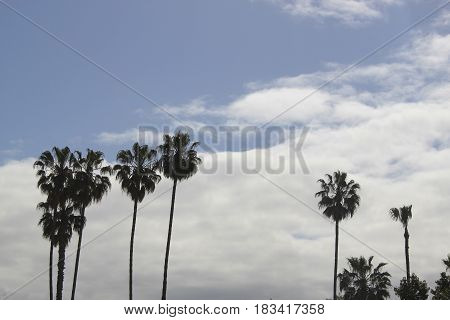 palm trees silhouetted against a cloudy sky