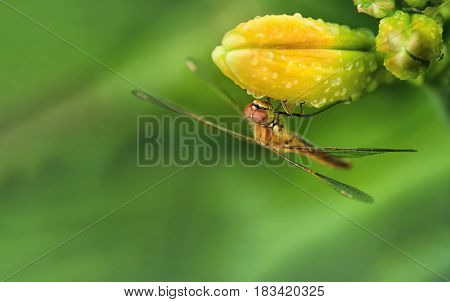 Dragonfly sitting on the flower buds of daylilies on blurred green background with place for your text horizontal location of the frame