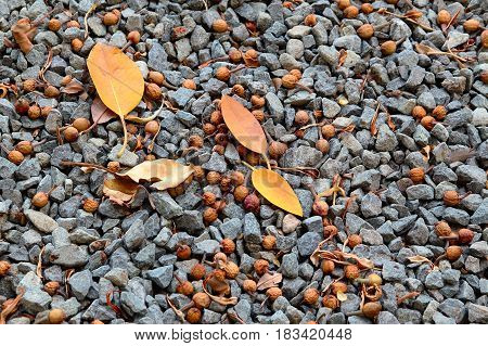 A yellow dry leaf on stone ground. Spain