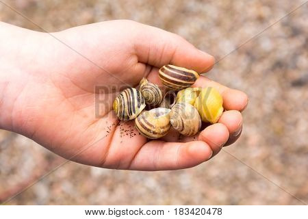 Empty Snail Shell In Boy's Hand