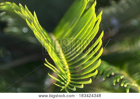 A closes up of a green tropical plants with spider web