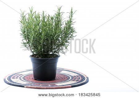 Rosemary Small Tree In A Black Plastic Pot On A Indigenous Style Bamboo Straw Rustic Placemat Isolat