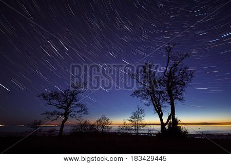 Silhouettes of trees against the background of the starry sky, Leningrad Region, Russia