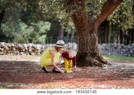 Female Farmer And Her Little Helper Working In Olive Grove In Italy