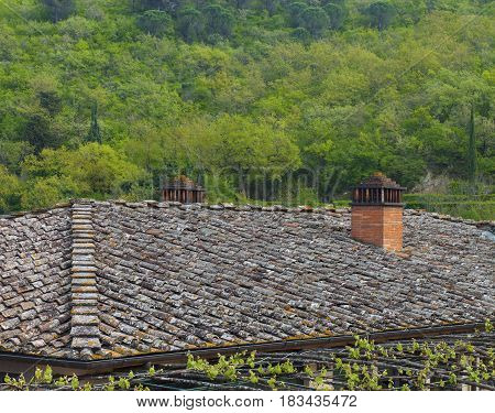 Tiling Roof Facing A Forest