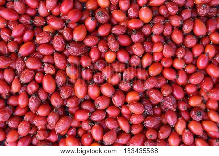 Closeup fresh red hawthorn background texture fruits