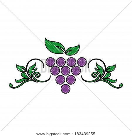grape leaf wine fruit product emblem vector illustration