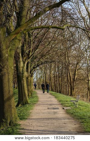 Three people going for an afternoon stroll along a walkway lined with trees