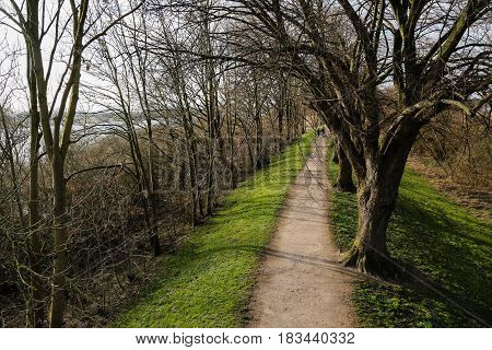 People strolling along a tree lines walkway in a park