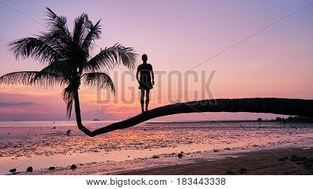 Palm And Beautiful Sunset