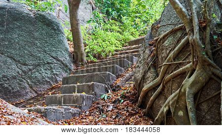 Stairway in the forest. Stones and fallen leaves Pangan.
