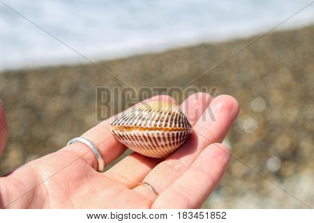 Life on the palm. A living shell that washed ashore during a storm.