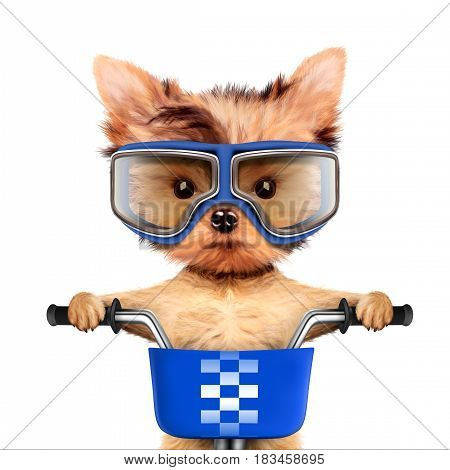 Funny adorable puppy sitting on a bike with basket and wearing goggles, isolated on white. Delivery concept. Realistic 3D illustration of yorkshire terrier with clipping path