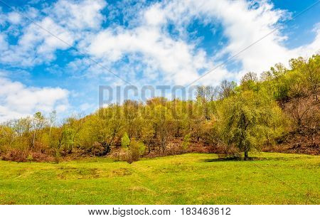 Tree On The Grassy Meadow In Mountains
