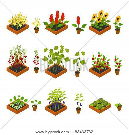 Plant, Vegetables, Fruits and Flowers Seedling witch Elements Set Isometric View Cultivated Agriculture. Vector illustration