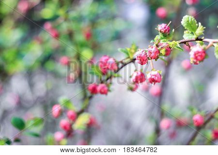 Twigs with pink buds on a green background