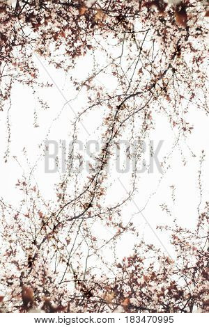 Interlacing of thin branches on a white background