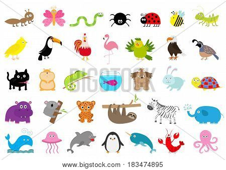 Zoo pet wild animal set Cute character Ant butterfly spider ladybug bee jaguar toucan dog hippopotamus elephant sloth koala flamingo cat fish and zebra Flat design White background Vector
