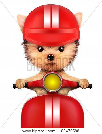 Funny adorable puppy sitting on a red motorbike and wearing helmet, isolated on white. Delivery concept. Realistic 3D illustration of yorkshire terrier with clipping path